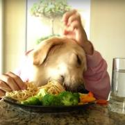 Video yotube hayati chef dog chien kalb